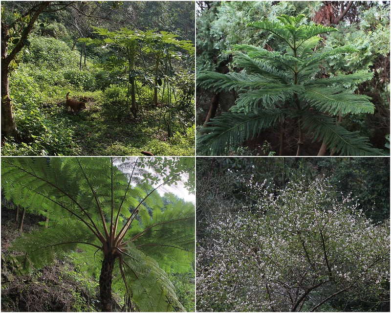 【發現台灣新林業】張龍壽造林20年 盼成遊憩好去處