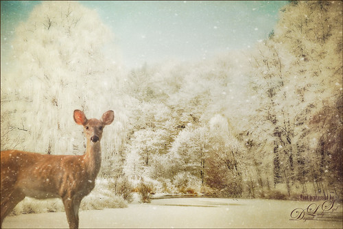 Image of a wintry landscape with deer
