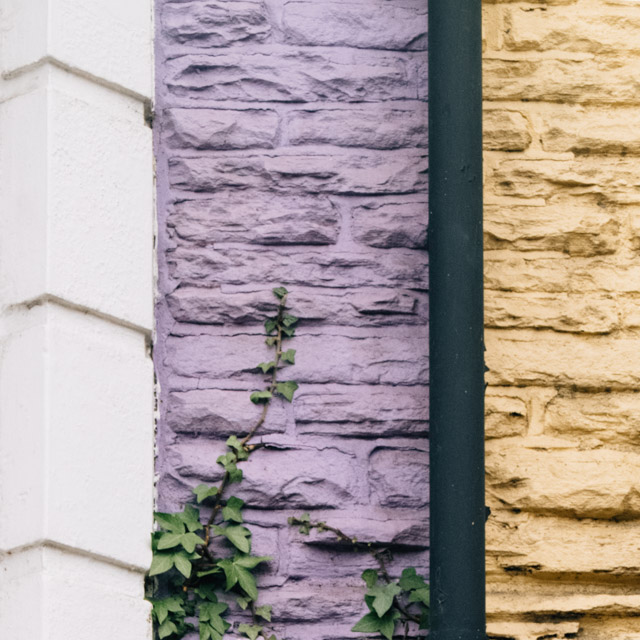 purple and yellow walls