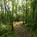 Crossford_Stonebyres_DSC5334.jpg