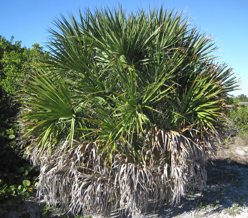 Cayo Costa Island Southwest Florida