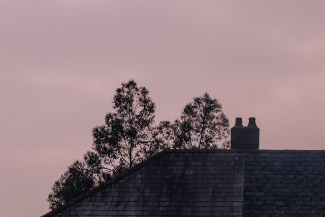 tree behind roof