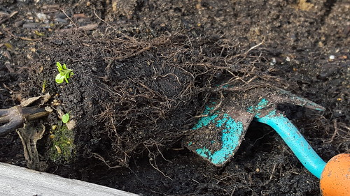 trowel in compost under plant roots