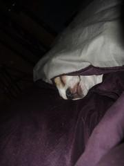 Beaker in bed