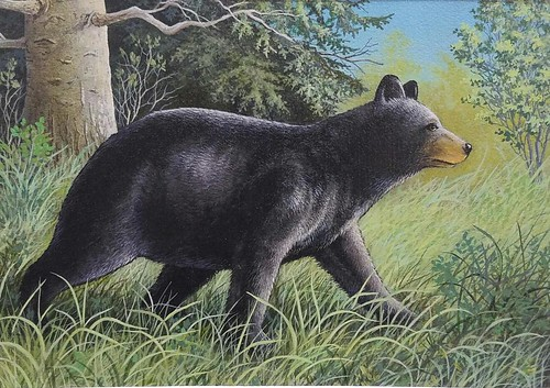 Larry Smail's Winning Black Bear Conservation Stamp