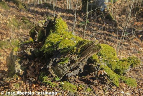 Parque natural de Gorbeia #DePaseoConLarri #Flickr -2800