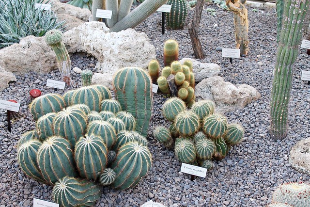 The Cacti Garden in the Conservatory at the New York Botanical Garden
