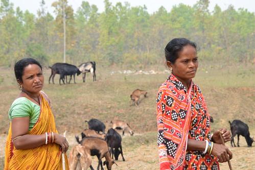 Mayurbhanj goat farmers