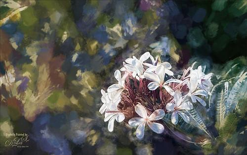 Image of Hawaiian Plumeria