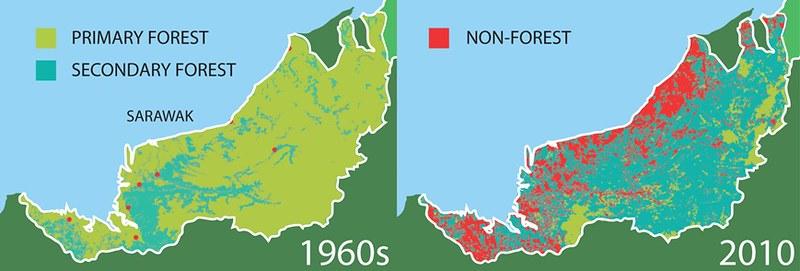 砂拉越森林對照圖。圖片來源:達邦樹。