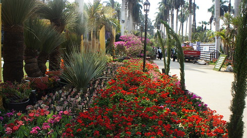 More colorful flowerbeds in the fair