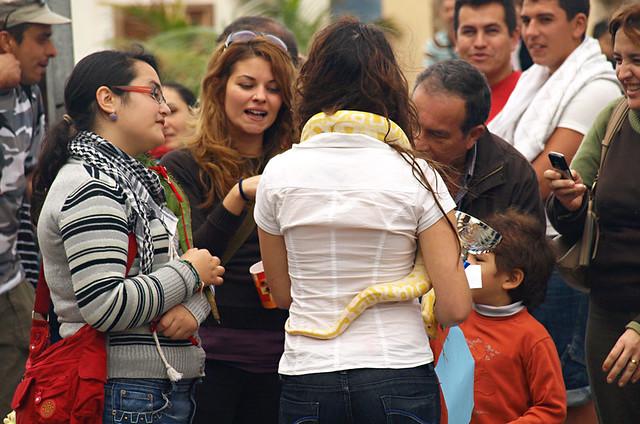 Snake, San Abad, Buenavista del Norte, Tenerife