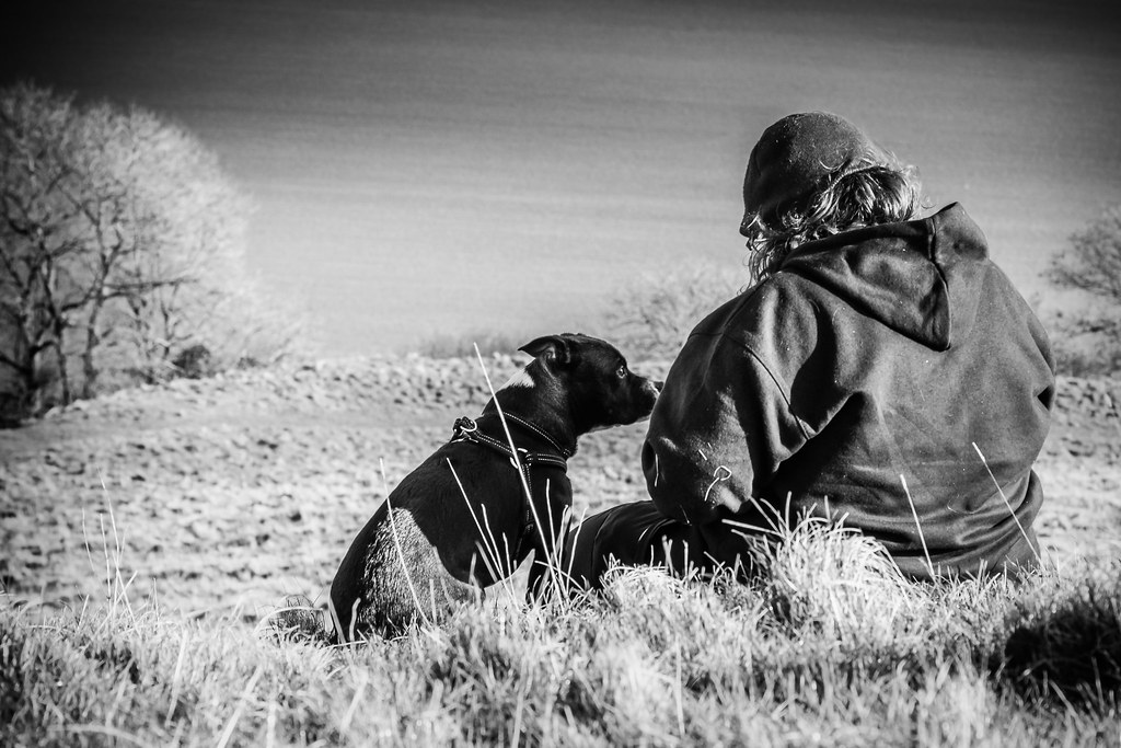 Image Result For Hearing Dog Training