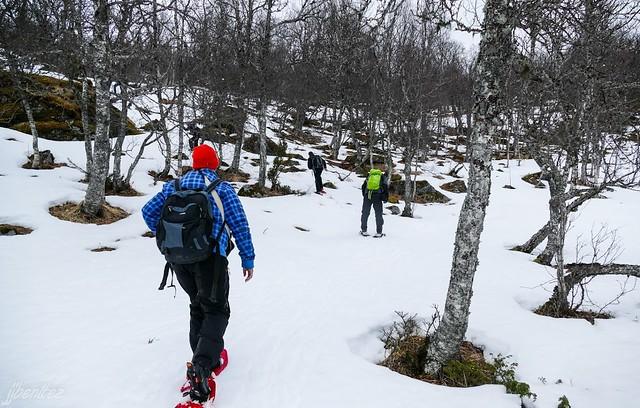 Sele caminando por la nieve en Laponia Noruega