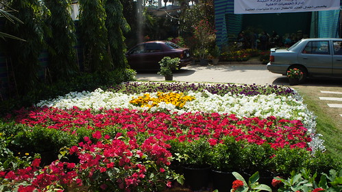 Flowerbeds arranged like the flag of Egypt
