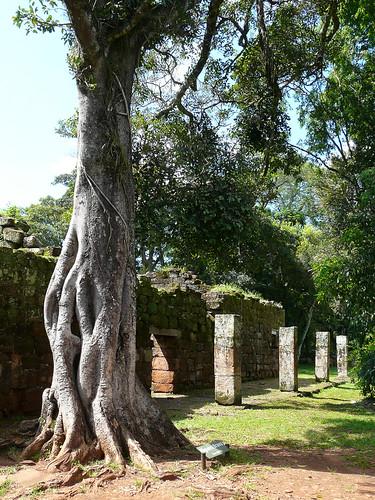 """""""Corazon de piedra"""", l'arbre qui pousse autour d'une colonne"""