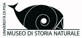 logo museo Calci