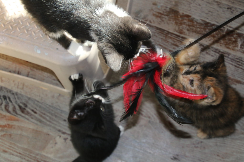Rescue Cats In Chingford