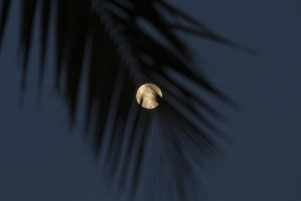 Full Moon Makes Alien Impanle Ring In Ear