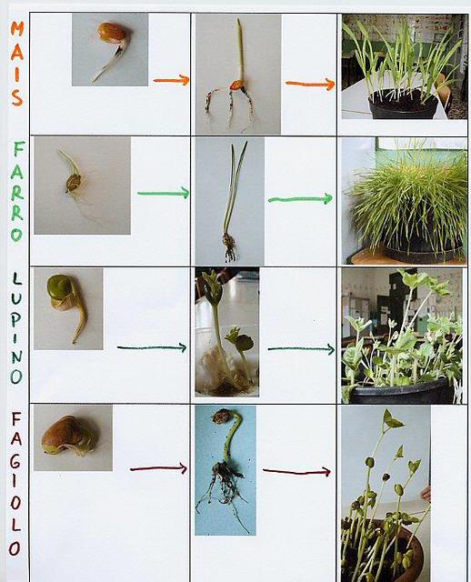comparazione crescita