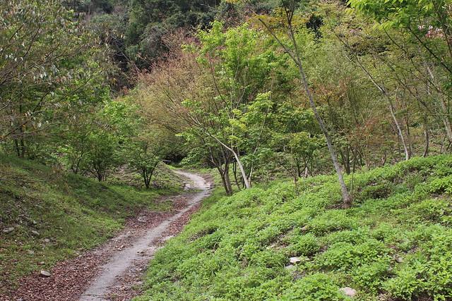 國內2012年至2015年累計執行造林面積12,019公頃。攝影:廖靜蕙。