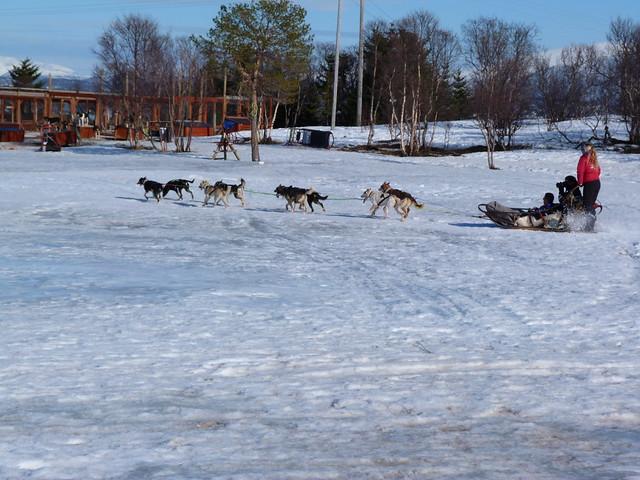 Trineo de perros en Noruega