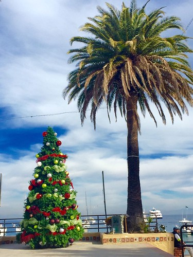 Catalina Island Christmas
