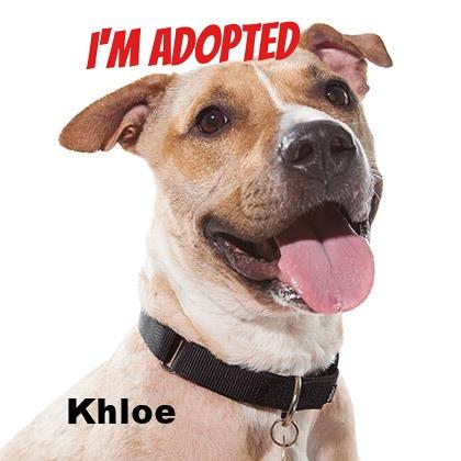 Image Result For Dog Training Cl Es