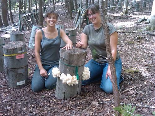 Workshop participants examining forest grown lion's mane mushrooms