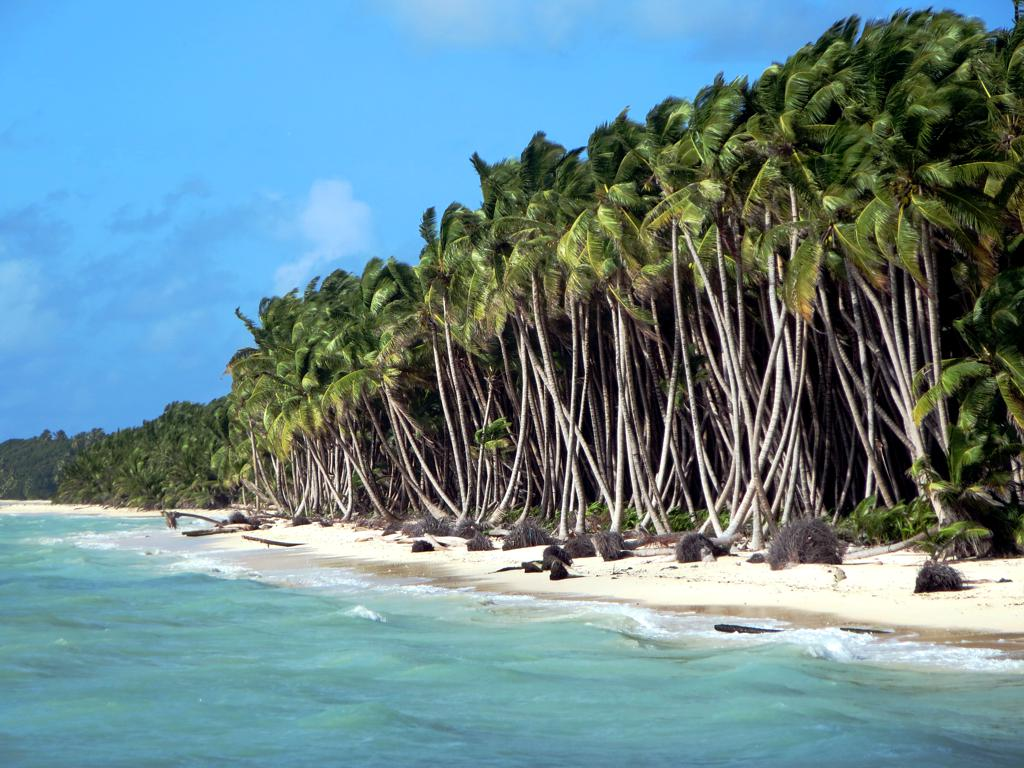 Coconut Plantation The Cocos Keeling Islands Were One
