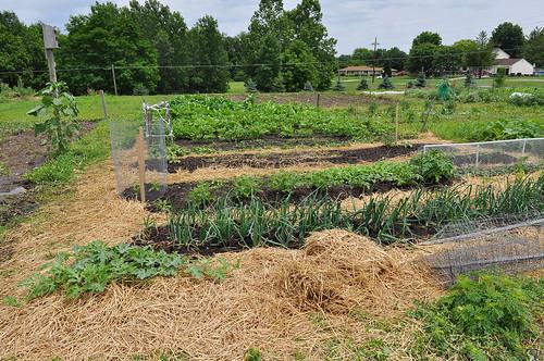 Join the Greenwood Community Garden! | Center Grove, Greenwood |
