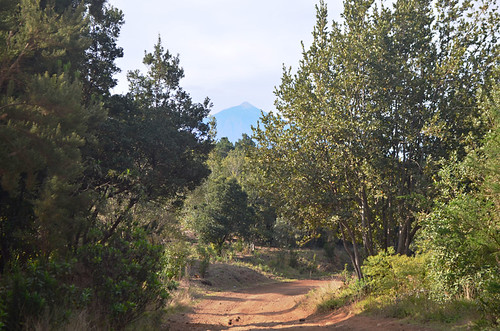 Agua Garcia Forest, Tacoronte, Tenerife