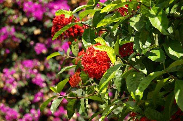Flowers, Botanico Gardens, Puerto de la Cruz, Tenerife