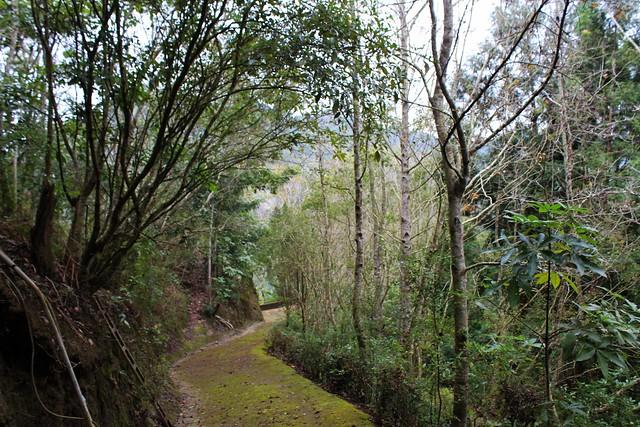 森林提供了眾多生態服務功能,透過經營管理得以永續,這也是台灣新林業的契機。攝影廖靜蕙
