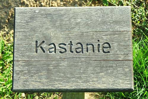 Keltischer Baumkreis Baum-Horoskop Orakel Bad Rappenau Kurpark Salinenpark Foto Brigitte Stolle Mannheim 2015