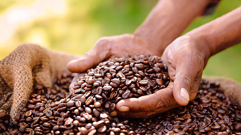 Farmer holding Fairtrade coffee beans
