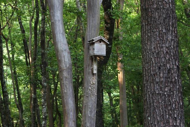 奧萬大森林中的鳥巢箱,每年約30隻雛鳥從這裡離巢。攝影:廖靜蕙