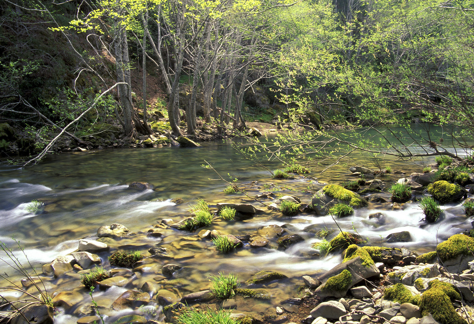 Eel Wild and Scenic River
