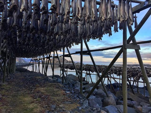 Secadero de bacalao en Reine (Islas Lofoten)