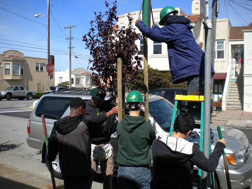 Friends of the Urban Forest planting a tree