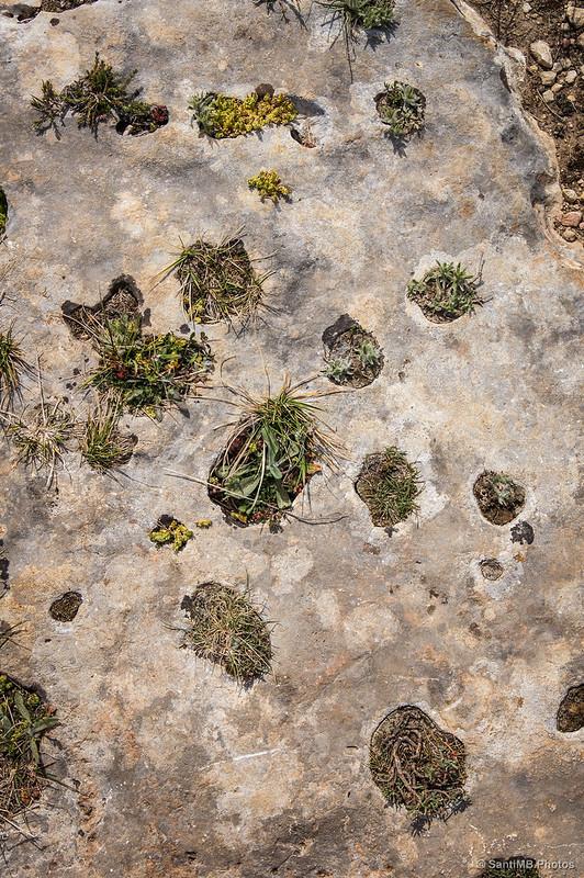 Jardín natural en la roca