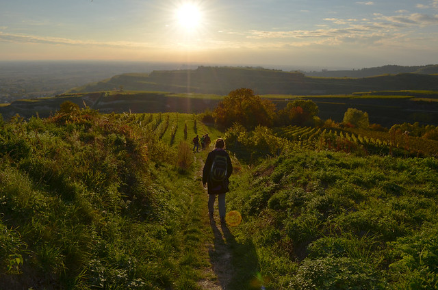 Descending to Ihringen, Kaiserstuhl, Germany