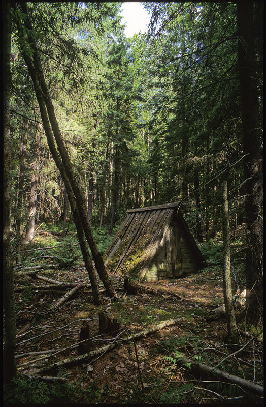 Визира в лесу фото