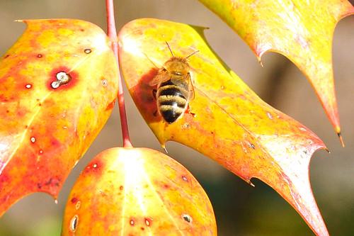 Mannheim Herzogenriedpark Februar 2016 Tiere Pflanzen Streichelzoo Trauerweide Gänse Enten See Frühblüher Bienen Multihalle blühende Mandelbäume Mandelblüte in Mannheim Foto Brigitte Stolle Mannheim Februar 2016