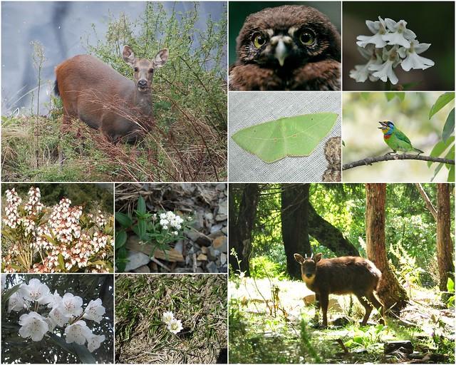 丹大地區擁有豐富的野生物相,成為發展生態旅遊的優勢。圖片來源:南投林管處