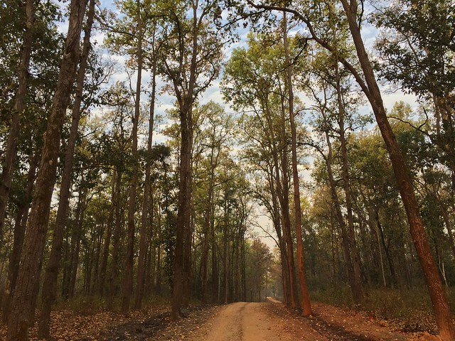 Bosques de Kanha (India)