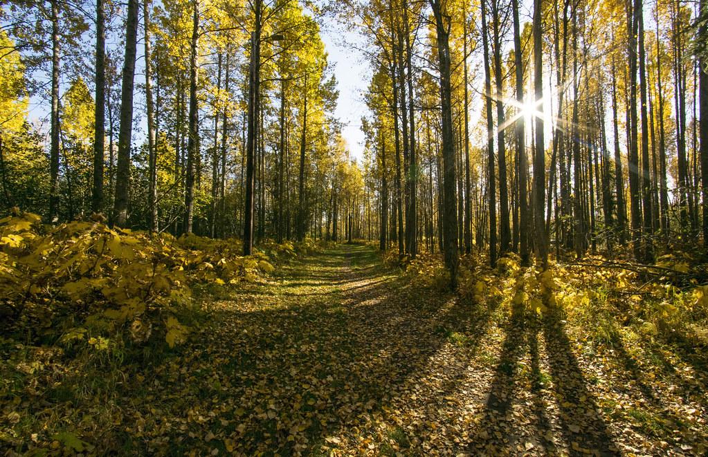 樹林一景。圖片來源:Doug Brown(CC BY 2.0)。