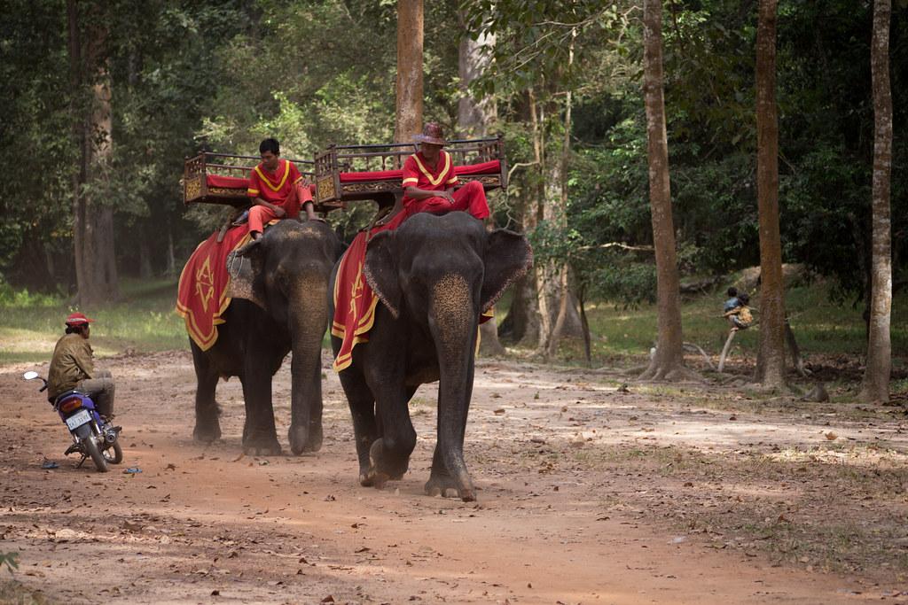 Terrace of the elephants angkor thom as i finished my for Terrace of the elephants