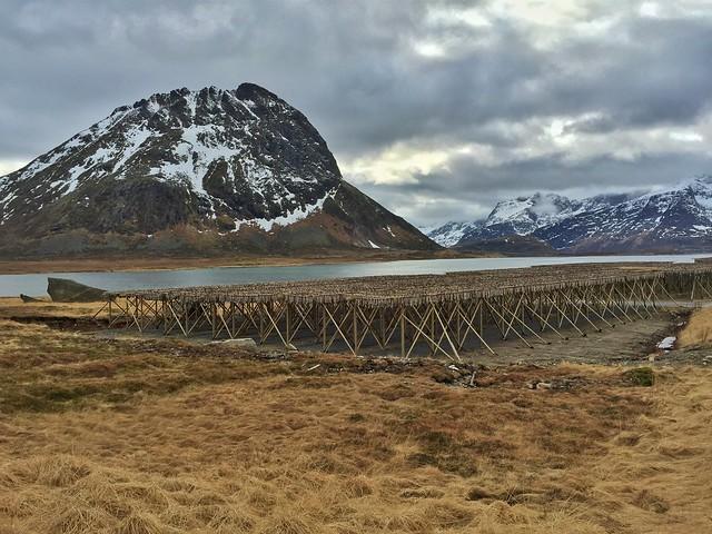 Secadero de bacalao en Islas Lofoten (Laponia Noruega)