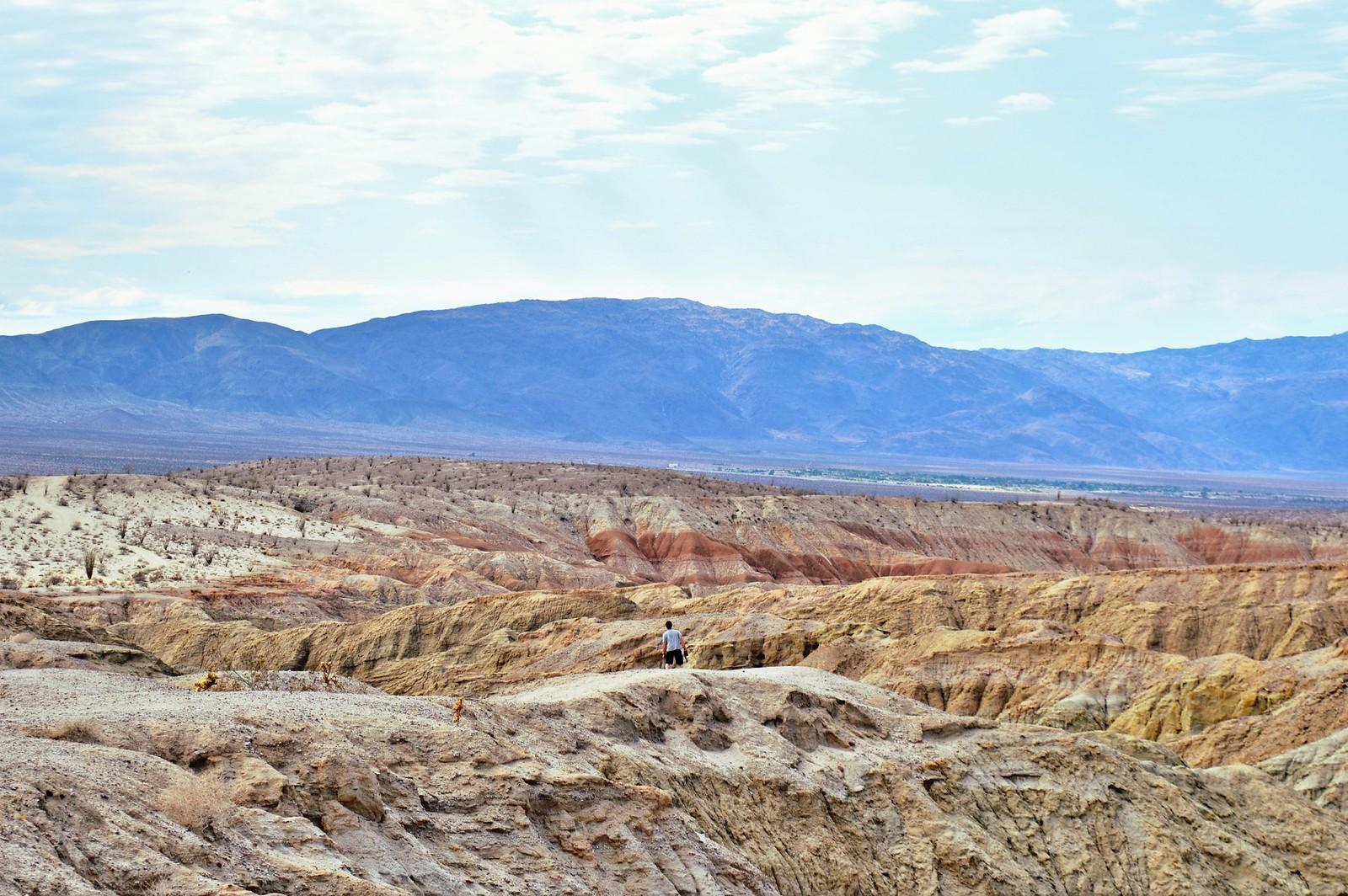 Anza-Borrego Desert State Park, California (USA).